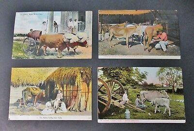 Early CUBA 4 Postcards Animals & Agriculture Unusual