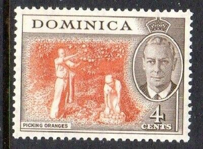1951 DOMINICA 4c drying oranges SG124 mint unhinged