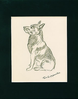 VINTAGE Dog Print 1940 Schipperke by Lucy Dawson