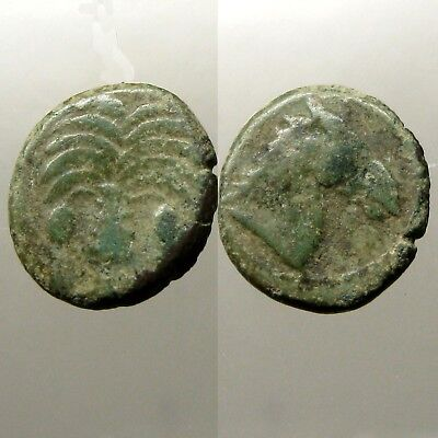 CARTHAGE ZEUGITANA BRONZE AE18____Horse / Palm Tree_____QUEEN DIDO / PUNIC WARS