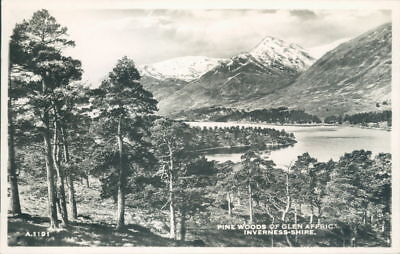 Pine Woods of Glen Affaric Inverness-shire  Real Photo J.B White