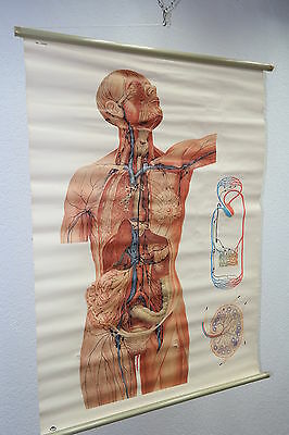 "Old Large Teaching Board "" Chart Human "" Unterricht Wall - Role Map"