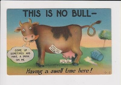Vintage Postcard This is No Bull  - unused