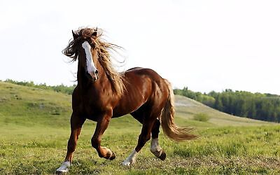 Brown horse running Beautiful Natural Picture Photo / Picture / Image #012
