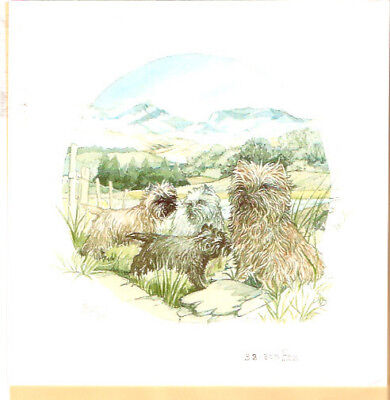 Cairn Terrier Limited Edition Art Print by UK Artist Barbara Hands Boz #39