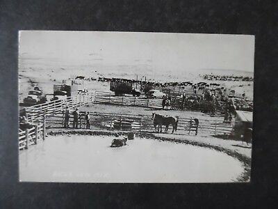 1956 Raton New Mexico Cattle Pens Postcard
