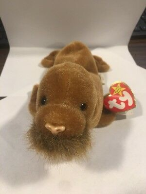 4999b01e412 TY BEANIE BABY - TUSK the Walrus Plush collectible toy -  7.99 ...