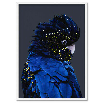 Black Cockatoo Wall Art Print. Blue Watercolor Style Australian Bird | ANA-01