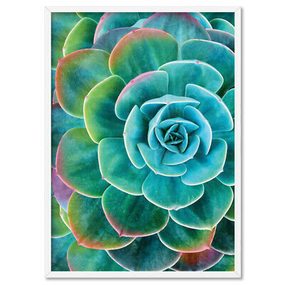 RAINBOW TIPS CACTUS SUCCULENT PLANT - Wall Art Print Poster Canvas - On Trend