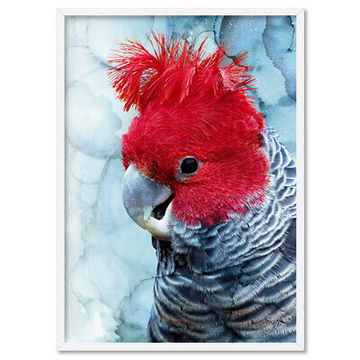RED GREY GANG GANG COCKATOO - Wall Art Print Poster Canvas - On Trend