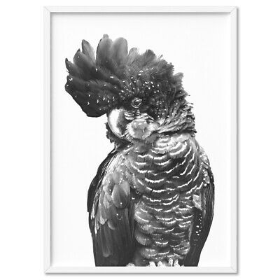 BLACK COCKATOO PARROT / in Black & White - Wall Art Print Poster Canvas