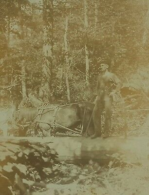 1900 Occupational Loggers Horses Logging Real Photo 8 x 10 Antique