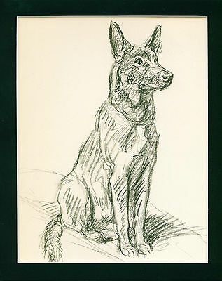VINTAGE Dog Print 1940 German Shepherd by Lucy Dawson