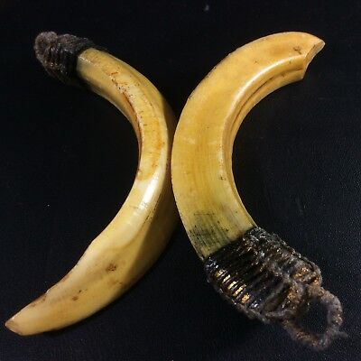 Holy Real 2 Wild Pig BOAR Hog Teeth Fang Power Blessing Thai Beast Tooth Amulet