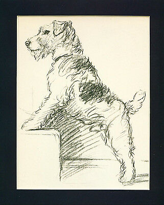 Dog Print 1940 Cute Wire Fox Terrier by Lucy Dawson VINTAGE