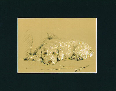 Dog Print 1940 Poodle Dog by Lucy Dawson VINTAGE