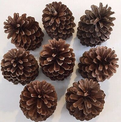 """8 PINE CONES Natural Large 4"""" - 4 1/4 """" High ~ 2""""- 2 1/4"""" wide ~ Crafts"""