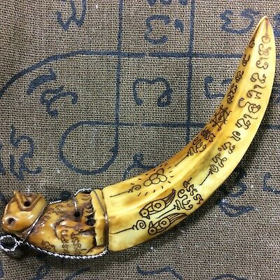 Power Yantra TIGER Carved Real Wild BOAR Solid Pig Tooth Thai Amulet Powerful