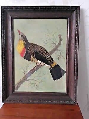 Vintage Real Feather Hand Painted Bird Picture