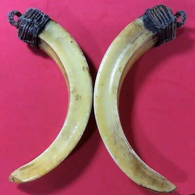 Power Real Wild Pig Tooth 2 BOAR Fang Thai Amulet Bless Talisman Lucky Pendant