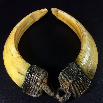 Real 2 BOAR Wild Pig Teeth Holy Power Thai Amulet Blessing by Lp PERN Pendant