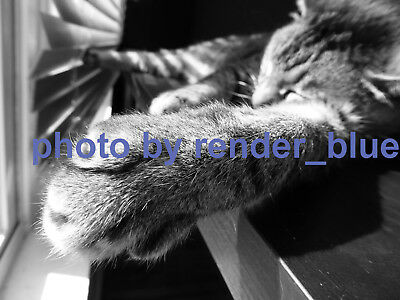 "Digital Picture/photo/ Desktop Wallpaper Image ""cat Paw"""
