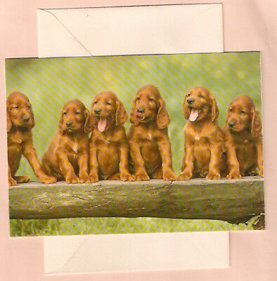 Irish Setter Row of Puppies Best Wishes Card Cards Pack of 5 (b)
