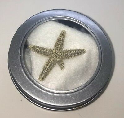 Natural Starfish Specimen Collectible Dried Regrowing An Arm