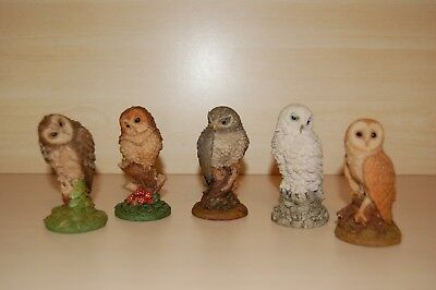 Royal Doulton Set of 5 Miniature Owls