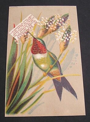 Advertising Card, Mrs. Demorests Reliable Patterns, Clothes, Great Hummingbird