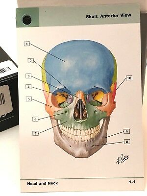 Moore S Clinical Anatomy Flash Cards 41 34 Picclick Au