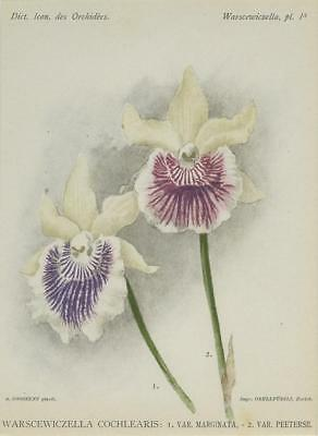 Print Plate from 'Dictionnaire Iconographique des Orchidees' - Warscewiczella Co
