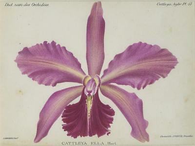 Print Plate from 'Dictionnaire Iconographique des Orchidees' - Cattleya Ella