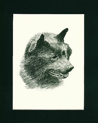 Dog Print 1935 Schipperke Dog by Francis Wardle VINTAGE