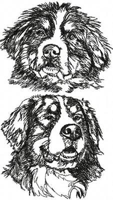 Bernese Mountain Dog Graphic SET OF 2 HAND TOWELS EMBROIDERED
