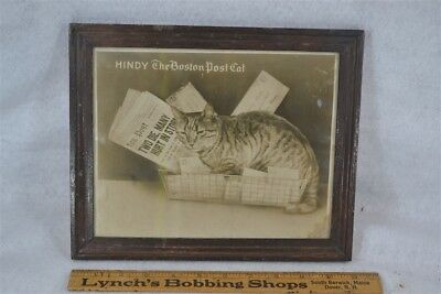"""cat tiger kitty advertising """"Hindy The Post Post Cat"""" photo antique 1920s"""