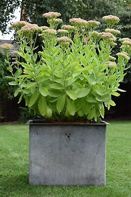 Vintage Galvanised Planter old garden reclaimed trough pot bath tin water tank
