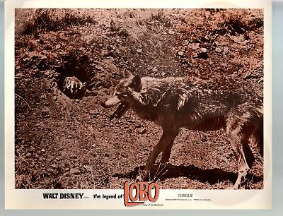 Legend Of Lobo...King Of The Wolfpack-11x14-Color-Lobby Card-Disney