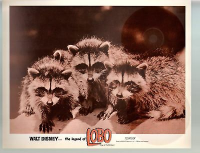 Legend Of Lobo...King Of The Wolfpack-11x14-Color-Lobby Card-Racoon-Disney