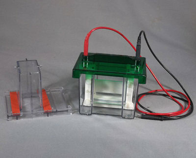 Bio-Rad Mini Protean 2 Gel Electrophoresis System with Casting Stand