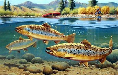 "Cynthie Fisher ""Morning Browns"" Brown Trout Print 12"" x 7.75"""