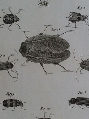 18th Century 1768 RARE Large Size Copper Engraving Print INSECTS B Diderot
