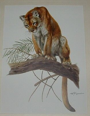 Mountain Lion/Puma Art Print by Wilhelm Eigener (1904-1982)