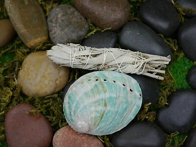 Smudging Kit  (Small Abalone Shell 8.5cm) White Sage Smudge Stick