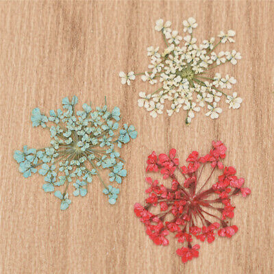 12pcs Pressed Dried Flowers for DIY Floral Decor Arts Crafts Necklace Jewelry
