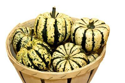 PUMPKIN Sweet Dumpling 15+ seeds vegetable garden HEIRLOOM ORGANIC squash mini