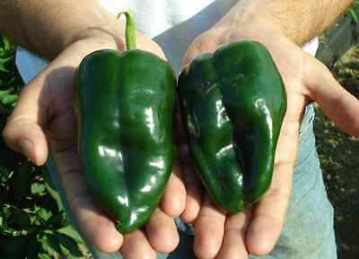 25 Ancho / Pablano Pepper Seeds Heirloom 2019 ( Non-Gmo Free Shipping! )