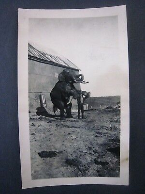 Vintage early 1900s Sells-Floto Circus Photo...' Man & Tusker '...Sideshow