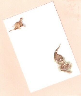 Otter Notelets Note Cards Stationery by UK Artist Julie Hockins  Pack of 6 (h)