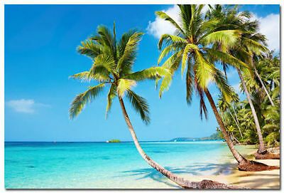 Poster beach poster coconut 9186346